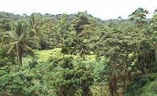 bosque_YALARE