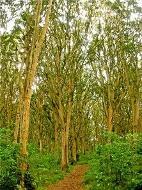 bosque_de_los_arrayanes