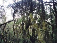 bosque_de_matache