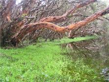 bosque_de_polilepis